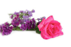 Pink Rose and Statice flowers. On white background Royalty Free Stock Image