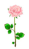 Pink rose with stem and leaves on a white background.Vector illu Stock Image