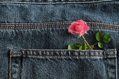 A pink rose sticking out of a back pocket of a denim Royalty Free Stock Photography