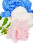 Pink rose and sweet desert. Royalty Free Stock Photo