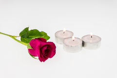 Pink rose with Tea light  isolated on white Stock Photos