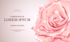 Pink rose with the text on the card or invitation. Vector illust Stock Photo