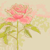 Pink rose on toned background Stock Photography