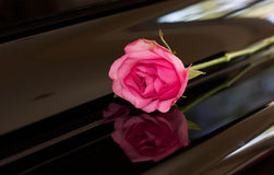 Pink rose on top of piano Royalty Free Stock Photography