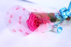 Pink rose, valentine gift Royalty Free Stock Photos