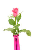Pink rose in vase Royalty Free Stock Image