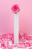 Pink rose in a vase Royalty Free Stock Photo
