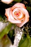 Pink Rose in vase stock photos