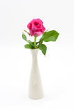 Pink Rose in Vase isolated Stock Photo