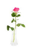 Pink rose in vase, isolated over white Stock Photo