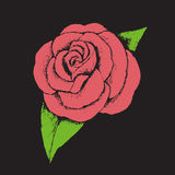 Pink rose. A vector drawing of a pink rose Royalty Free Stock Images