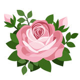 Pink rose. Vector illustration. Stock Photos