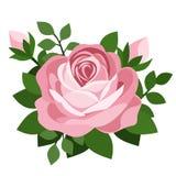 Pink rose. Vector illustration. stock illustration