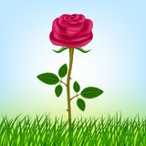 Pink rose. Vector illustration! Image! royalty free stock images