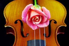 Pink rose and Violin close-up royalty free stock images