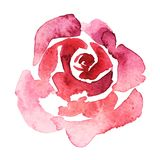 Pink rose watercolor hand-painted, isolated on white, valentine illustration. Pink rose watercolor hand-painted, isolated on white Royalty Free Stock Photography