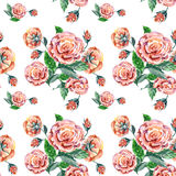 Pink rose, watercolor, pattern seamless Stock Images