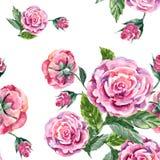 Pink rose, watercolor, pattern seamless Royalty Free Stock Image