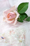 Pink rose on wedding lace (copy space). One pink rose on wedding lace (shallow depth of field, copy space Royalty Free Stock Photo