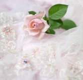 Pink rose on wedding lace (copy space). One pink rose on wedding lace (shallow depth of field, copy space Stock Image