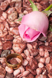 Pink rose with wedding ring on the little red stones Royalty Free Stock Image
