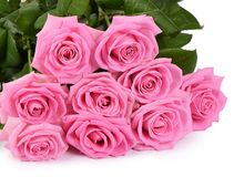 Pink rose on a white background Stock Photos