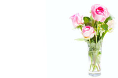 Pink rose on white background with copy space for text and clipp Stock Photos
