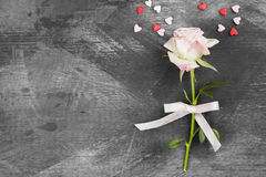 Pink rose with white ribbon on a dark background. Top view, copy Stock Image