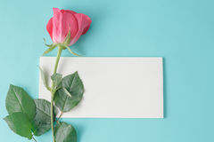 Pink rose and white she Royalty Free Stock Photography