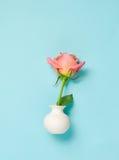 Pink rose in white vase on blue background Stock Image