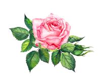 Free Pink Rose With Leaves. Watercolor For Wedding, Save Date Card Stock Photo - 109298040