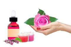 Pink rose in woman hand and bottle with essence oil on white Royalty Free Stock Image