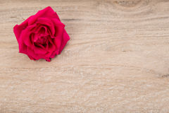 Pink rose on wood Royalty Free Stock Photography