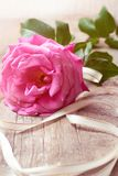Pink rose on wooden background. Concept for greetings card royalty free stock images