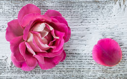 Pink rose on  wooden background Stock Photos