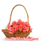 Pink rose in wooden basket Royalty Free Stock Image