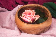 Pink rose in wooden cup Stock Photography