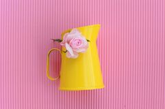 Pink rose with yellow jug Royalty Free Stock Images