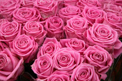 Pink Roses. Close-up of pink roses at florists in Paris, France Stock Photos
