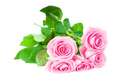Pink roses. Bouquet of beautiful pink roses Stock Images