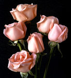 Pink roses. On black background in arrangement Royalty Free Stock Photo