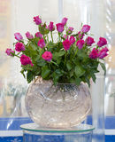 Pink roses. A bunch of pink roses arranged in a round glass vase royalty free stock image
