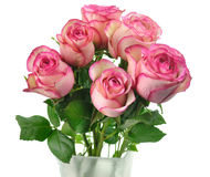 Pink roses. Fresh pink roses in a vase on white background Stock Image