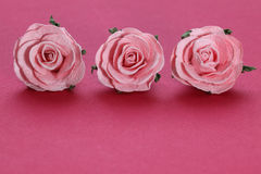 Pink roses. On pink background Stock Photo