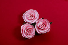 Pink roses. Three pink roses on red background Royalty Free Stock Photography