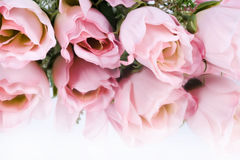 Pink Roses. Pretty pink roses refleceted on white background stock photos