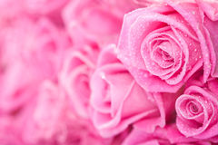 Pink roses. Beautiful pink roses background, bridal bouquet Stock Photos