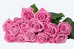 Pink roses. Armful of roses on the table. isolated image on white background Royalty Free Stock Photography