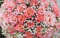 Pink roses. Holidays background from pink roses Royalty Free Stock Photo