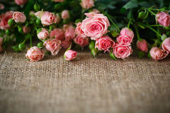 Free Pink Roses Stock Images - 48066184